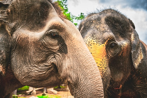 Elephant Nature Park in Chiang Mai with Lunch Thumbnail