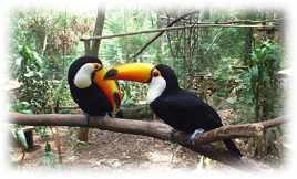 The Bird Park Visting Thumbnail